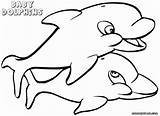 Dolphin Coloring Pages Baby Animal sketch template