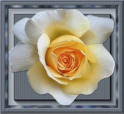 Fleur Aime Comme Je Jaune Roses Francheska45