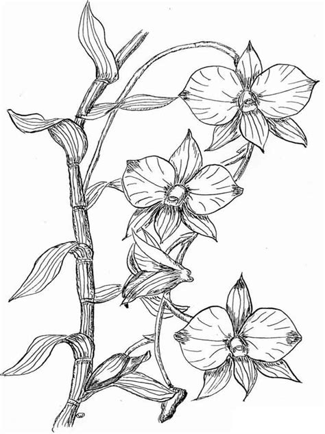 orchid coloring pages    print