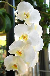 Summer Flower  Orchids