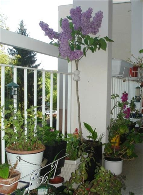le printemps sur mon balcon pipistrelle ribambelles et bouts d ficelle