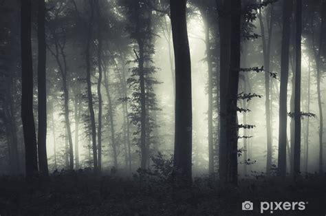 evening light   dark misty forest wall mural pixers