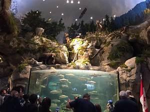 Fish tank generates controversy at new Bass Pro mega