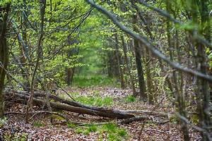 Free Images   Landscape  Path  Creek  Swamp  Wilderness