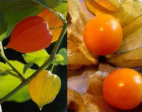 mudas de frutas  sabor frutas exoticas