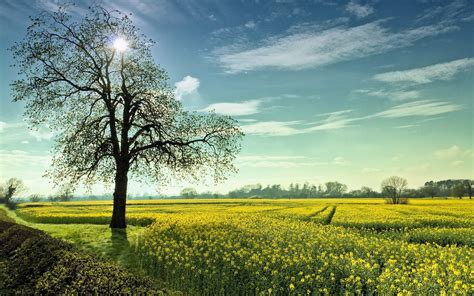 Landscape, Summer, Field, Trees, Nature Wallpapers Hd