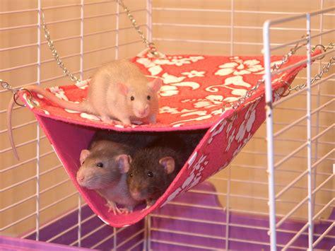 Pet Rat Hammocks by Mondo Rat Habitats