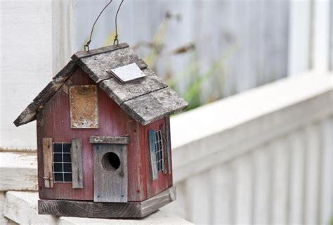 casas para pajaros c 243 mo instalar una bonita casa para p 225 jaros