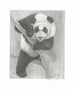 Panda Bear Drawing by Kathy Burns