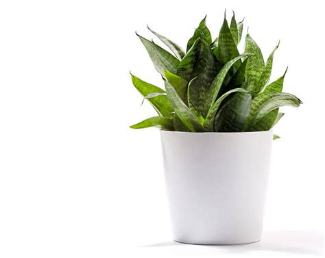Potted Plant Pictures, Images And Stock Photos