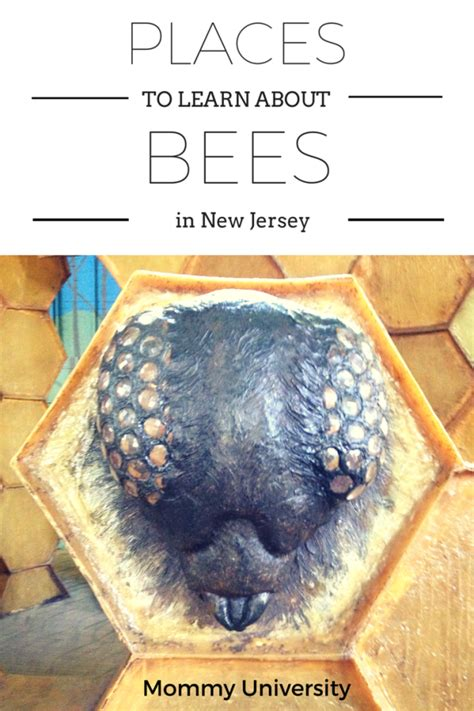 amazing places to learn about bees in new jersey