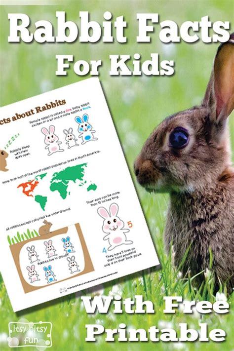 rabbit facts  kids itsybitsyfuncom
