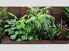 Urban Jungle Garden Design Clapham, London Bamboo