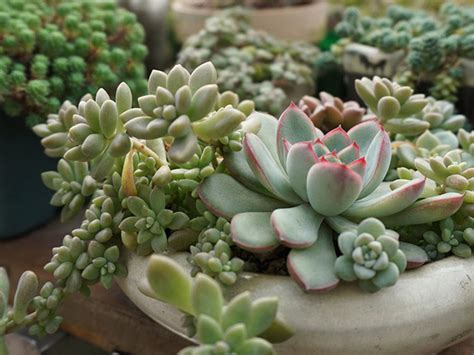how to water succulents inspirational tropical jungle gardens office spaces interiors