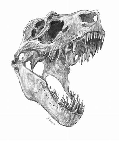 Rex Skull Drawing Head Pencil Drawings Tattoo