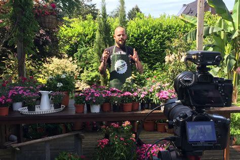hortensienschnitt im herbst fangemeinde f 252 r blumen und pflanzen w 228 chst taspo de