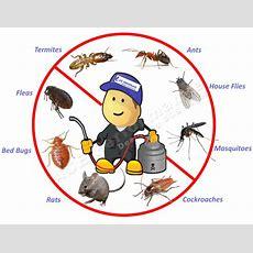 Schertz Pest Control  Serving Schertz And The Greater Ne