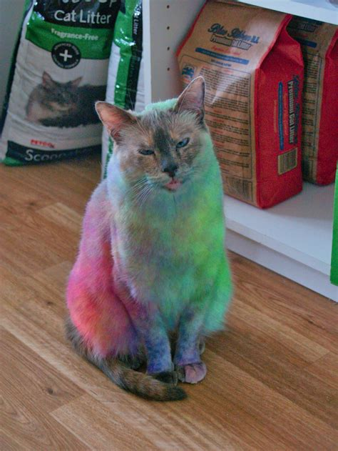 tie dye cat 301 moved permanently