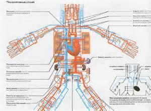Circulatory System