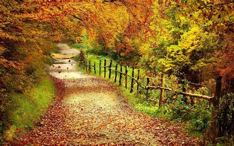 Fall Backgrounds For Desktop Computers by Free Hd Fall Wallpapers Make Your Screen Shine Brighter