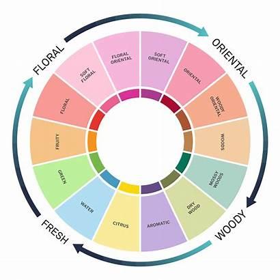 Fragrance Families Perfume Wheel Traditional Modern Guide