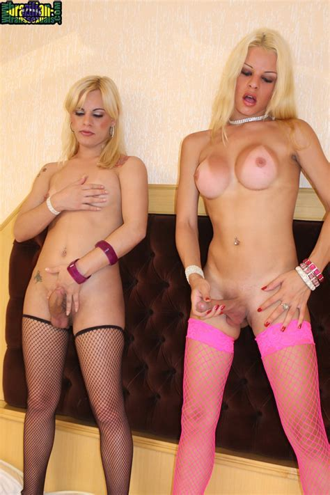 Brazilian Transsexuals Beautiful Blonde Tattooed Shemale Strokers Show Off Their Hu At