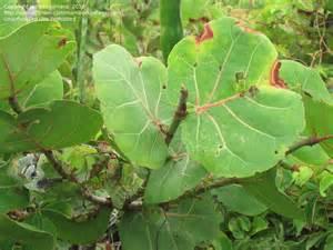 South Florida Tree Identification