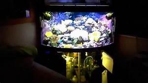 Juwel Trigon 350 : reef tank juwel trigon 350l 2 youtube ~ Frokenaadalensverden.com Haus und Dekorationen
