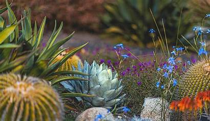 Desktop Garden Desert Happy Plant Naina Wallpapers
