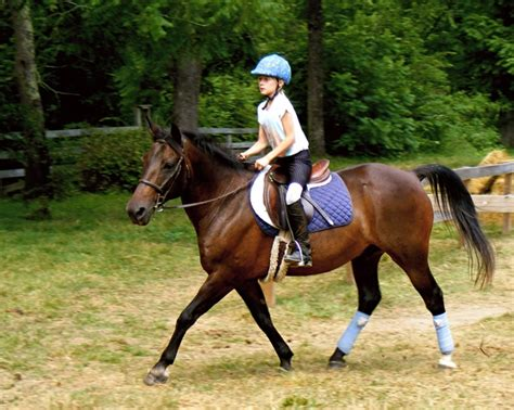 horseback riding camps information page