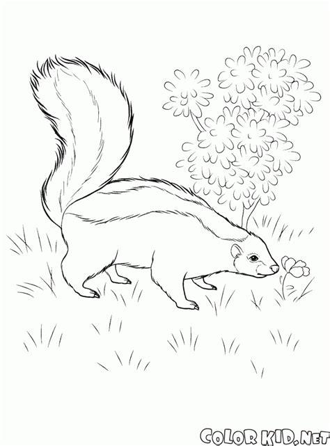 Kleurplaat Stinkdier by الحيوانات البرية تلوين صفحة