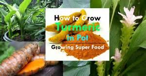 Gardening Tips Vegetables