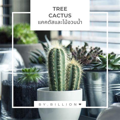 TREE Cactus. แคคตัส และ ไม้อวบน้ำ - Avaliações | Facebook