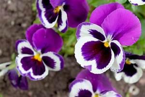 Was Sind Frühlingsblumen : aus fr hlingsblumen basteln sie herrliche deko f r ihr zuhause ~ Whattoseeinmadrid.com Haus und Dekorationen