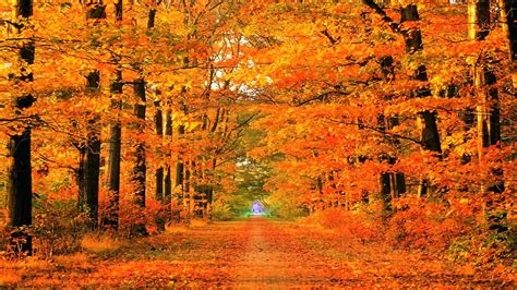 Animated Autumn Wallpaper - fall season backgrounds wallpaper cave