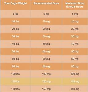 Dog Zyrtec Dosage Chart Golden Retrievers Golden Retriever Dog Forums Red Paws