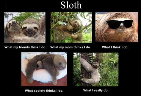 Memes Sloth - 47 best sloths scary as hell images on pinterest sloths funny stuff and adorable animals