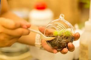 Sukkulenten Im Glas Pflanzen : sukkulenten im glas so setzen sie sie richtig ein ~ Eleganceandgraceweddings.com Haus und Dekorationen