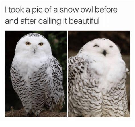 White Owl Meme - white owl meme 28 images o rly know your meme image 196194 o rly know your meme amy s