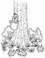 Maple Syrup Tree Coloring Activities Pages Homemade Sugaring Drawing Sugar Tap Crafts Sucre Preschool Sap Cabane Colouring Tlc Printables Taps sketch template