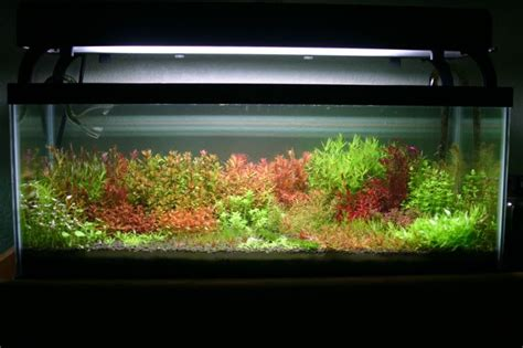 Aquascape Plants List by List Of All 29 Plants In This Aquascape Great