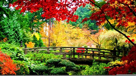 japanese autumn bridge wallpaper showa memorial park tokyo