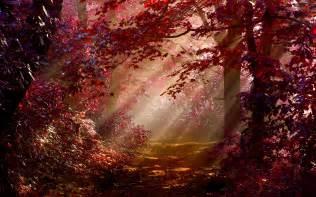 Red Autumn Forest Desktop Wallpaper