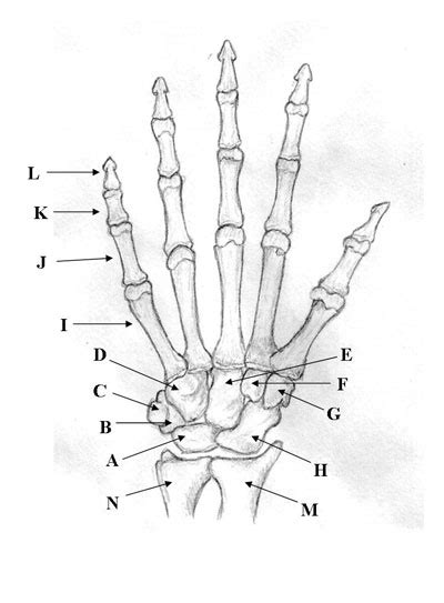 medical pictures info hand bones