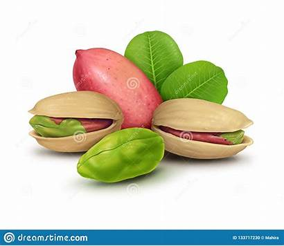 Pistachio Nuts Leaves Illustrations Clip Painting Ingredient