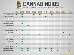 Cannabinoids  The Ultimate Guide To Cannabis Medicine