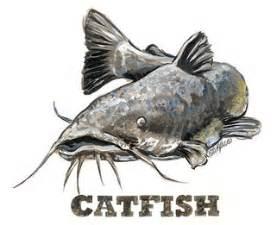 cat fishing 1000 images about catfish my favorite hobby catfishing