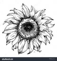 Pen and Ink Sunflower Drawing