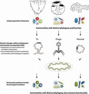 Working model of how sponge symbiosis has evolved toward ...