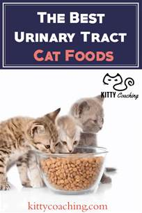 urinary tract cat food urinary tract cat food our top 5 picks october 2017
